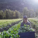 [FILLED] FARM JOBS: PEMBERTON, BC – Four Beat Farm