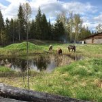 LAND OPPORTUNITY: Bio-diverse farmstead and fields near Quesnel, BC