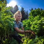 FARM JOBS: SURREY, BC – Farm Crew at Zaklan Heritage Farm