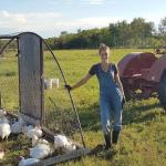 FARM JOB: HALKIRK, AB – LAZY T FARM, CHICKEN BOSS