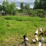 LAND & WORK-TRADE OPPORTUNITY: 5-ACRE FARM IN SOUTH SURREY