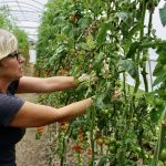 FARM JOB: DELTA, BC – KPU Farm Schools, Farmers Market Lead & Field Assistant