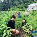 [FILLED] APPRENTICESHIP: LYTTON, BC – Solstedt Organics