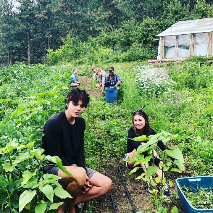 sostedt organics lytton farm job