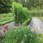FARM JOB: VICTORIA, BC – Rebecca's Garden