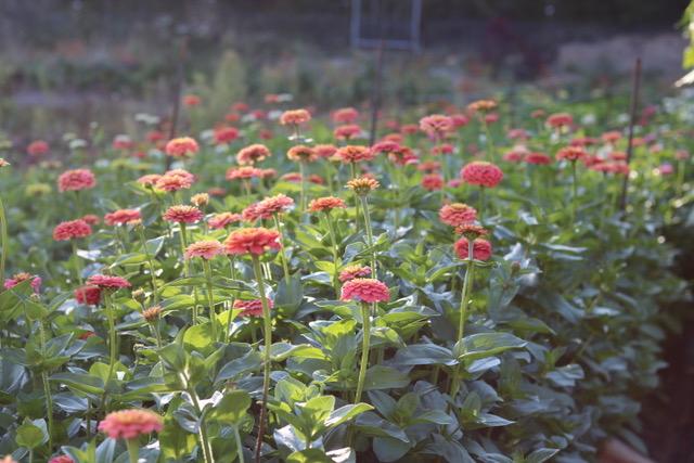 island flower farm