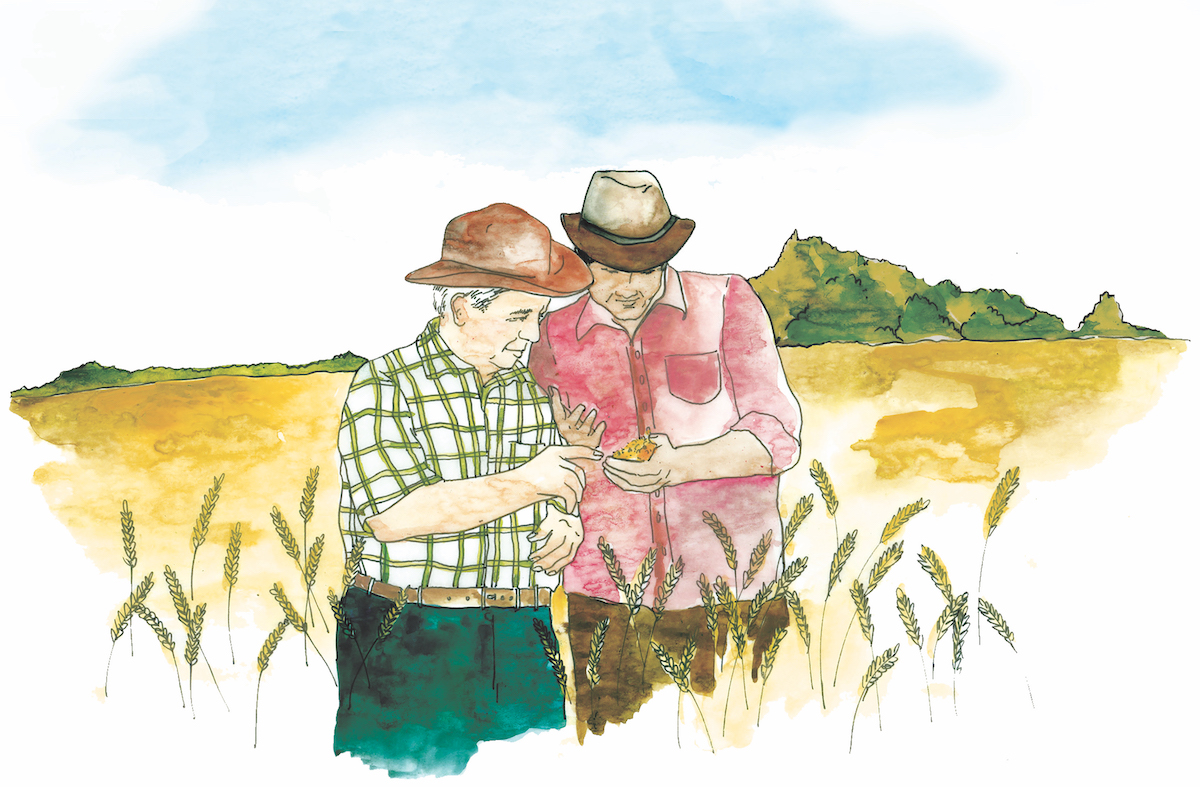 Non-Family Transition Illustration of two male farmers standing in a field of wheat discussing the crop