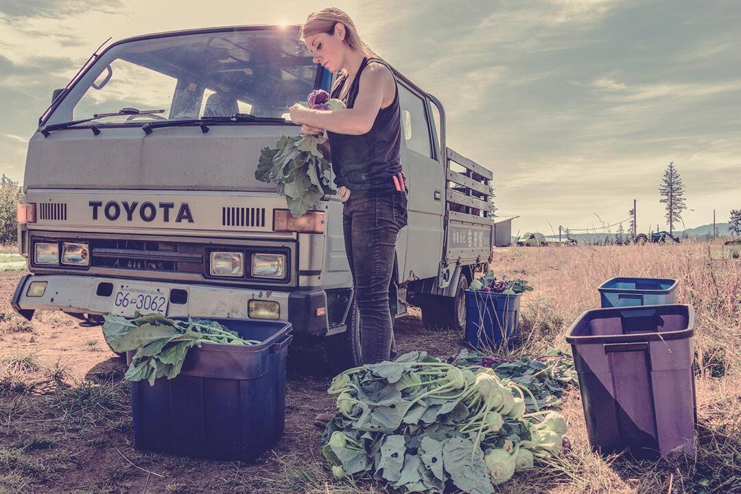 salt & harrow farm tsawwassen job apprenticeship