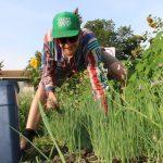Grand Trunk Veggies: Maximizing Urban Farming Potential