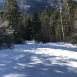 LAND OPPORTUNITY: Land share on organic farm in development in Slocan Park