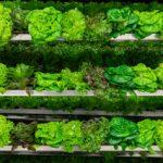 FARM JOB: Armstrong, BC – Greenlion Farms, Production Hand