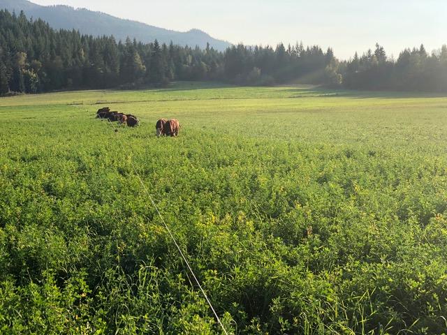 fresh valley farms cows