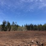 LAND OPPORTUNITY: Up to 5 Acres for Food Production on Developing Farm – Comox, BC