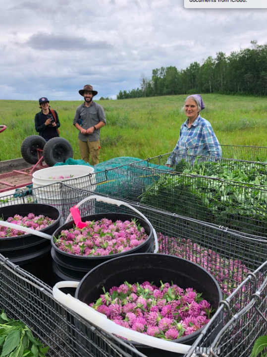 chickadee herb farm apprenticeship alberta red clover