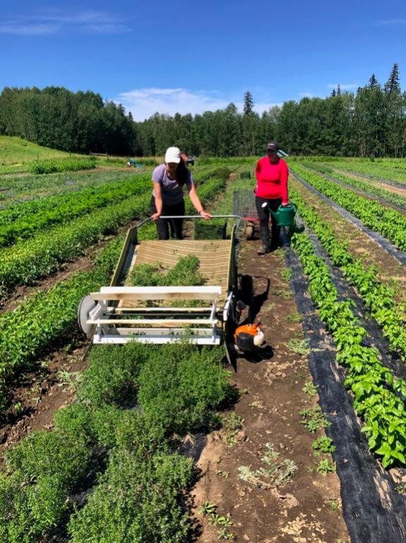 chickadee herb farm apprenticeship alberta
