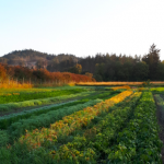 FARM JOB: LANGFORD, BC – Vitality Farm, Farm Crew