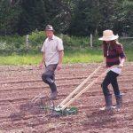 FARM JOB: Duncan, BC – Glenora Farm, Field Hand