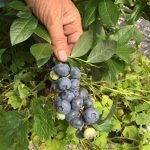 FARM JOB: LANGFORD, BC – Lohbrunner Community Farm, Farm Hand