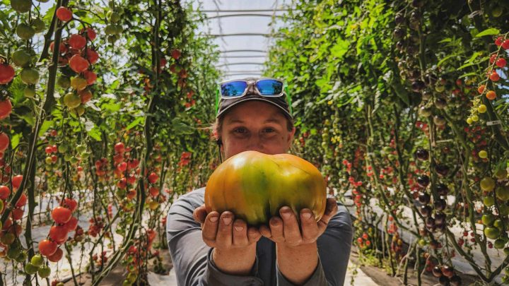 How to Select Vegetable Varieties for Greenhouse Growing