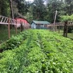 LAND OPPORTUNITY: Barn, Grazing Space and Established Vegetable Garden with Room to Expand – Comox, BC
