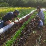 FARM JOB: Crofton/Duncan, BC – Tatlo Road Farm, Farm Worker
