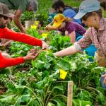 JOBS: KAMLOOPS & VANCOUVER ISLAND, BC – Seed Program Coordinators, FarmFolk CityFolk