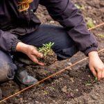 FARM JOB: North Saanich, BC – 10 Acres, Seasonal farm hand