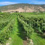 LAND OPPORTUNITY: 5 acre Orchard in Penticton, BC