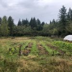 LAND OPPORTUNITY: 4 Acre Field with 1 Acre Market Garden – Courtenay, BC