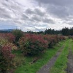 LAND OPPORTUNITY: 6.5 Acre Blueberry Orchard with On-Farm Store – North Cowichan, BC