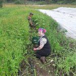 FARM JOB: Victoria, BC – Belle-Isle Farm, Part-time Farm Hand/Collaborator!
