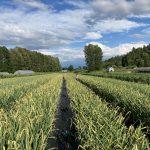 FARM JOB: Abbotsford, BC – Earth Apple Organic Farm, Farmhand