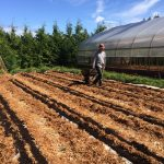 [FILLED] FARM JOB: COMOX VALLEY, BC – Good Earth Farms, Farm Helper