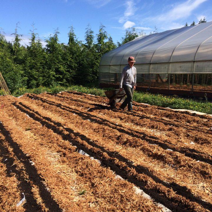 good earth farms mulched garden