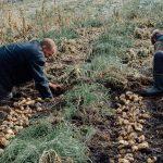 FARM JOB: Cawston, BC – Honest Food Farm, Farm help