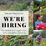 FARM JOBS: Qualicum Beach, BC – Island Flower Farm, 2 part-time farm labourers