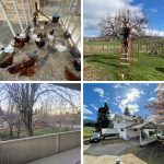 FARM JOB: Vernon, BC  – Farm Helper