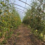 FARM JOB: North Saanich, BC – Kildara Farms, Farm Hand