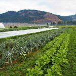 FARM JOB: Grindrod, B.C. – Mara Valley Produce, Organic Farm Assistant