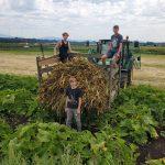 FARM JOB: Surrey, BC – Rondriso Farms, Rondriso Farm Hand