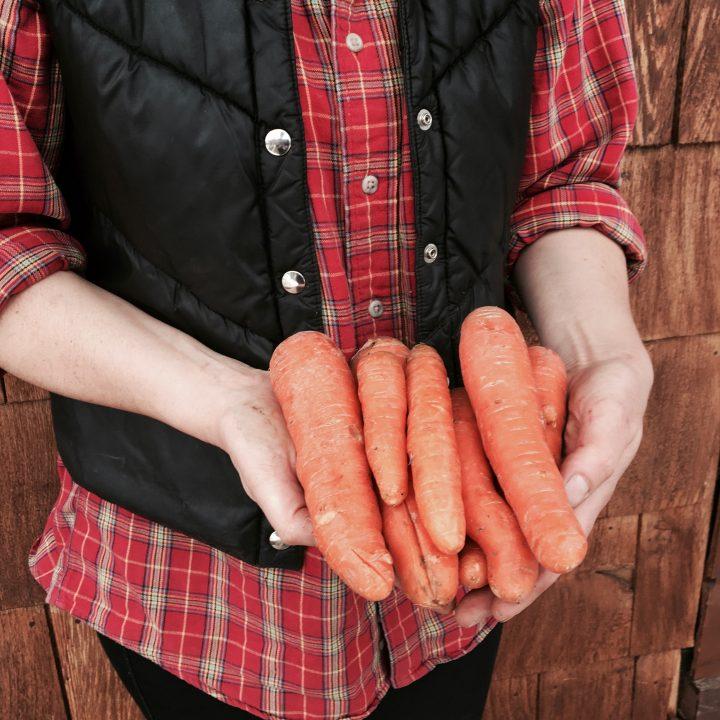 Shuswap Organics carrots