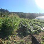 FARM JOB: Enderby, BC – Shuswap Organics, Farm Hand