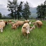FARM JOB: Cranbrook, BC – Silvertip Ranch, Farm Hand