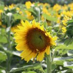 [FILLED] FARM JOB: Sorrento, BC – Sorrento Centre Farm, Permaculture Farm Assistant