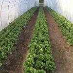 FARM JOB: Langley, BC – Stable Harvest Farms, Field Hand