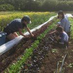 [FILLED] FARM JOBS: Crofton, British Columbia – Tatlo Road Farm, Farm workers