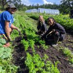 FARM JOB: VICTORIA , BC – Three Oaks Farm, Farm Manager