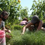 FARM JOBS: Montréal, Québec – Santropol Roulant, Urban Agriculture Garden Coordinator