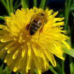 FARM JOB: Armstrong, British Columbia – Wild Antho, Apiary Technician