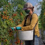 FARM JOB: Mara, BC – Wild Flight Farm, Greenhouse Lead